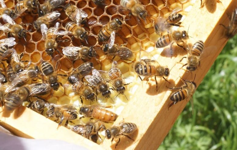 Andrew Rogers (Machinist) – Harvests honey and tends to over 3 million bees!